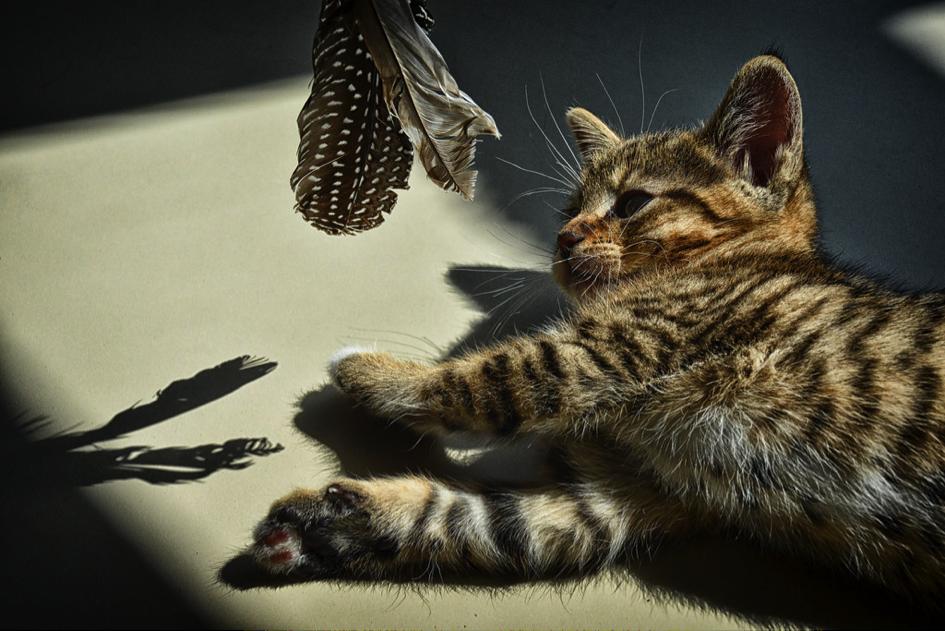 chat jouant, jouets pour son chat, blog Jopy