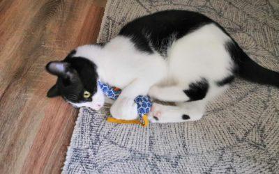 Tutoriel : Fabriquer un jouet pour chat avec des chutes de tissu
