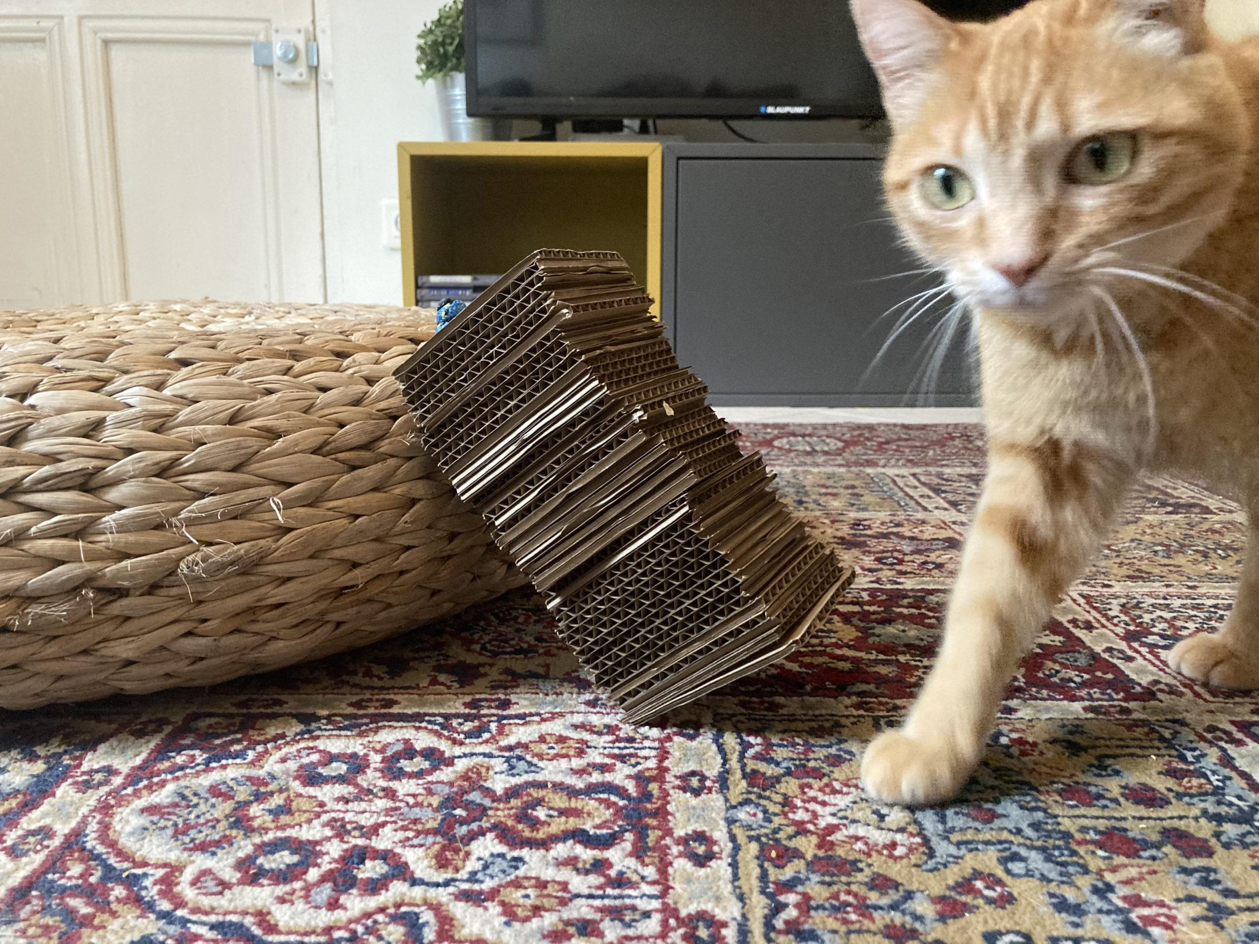chat avec griffoir