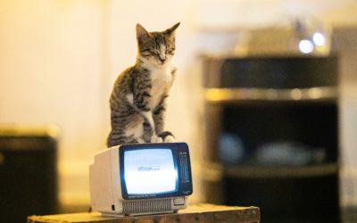 Des objets connectés qui améliorent le confort de nos chats