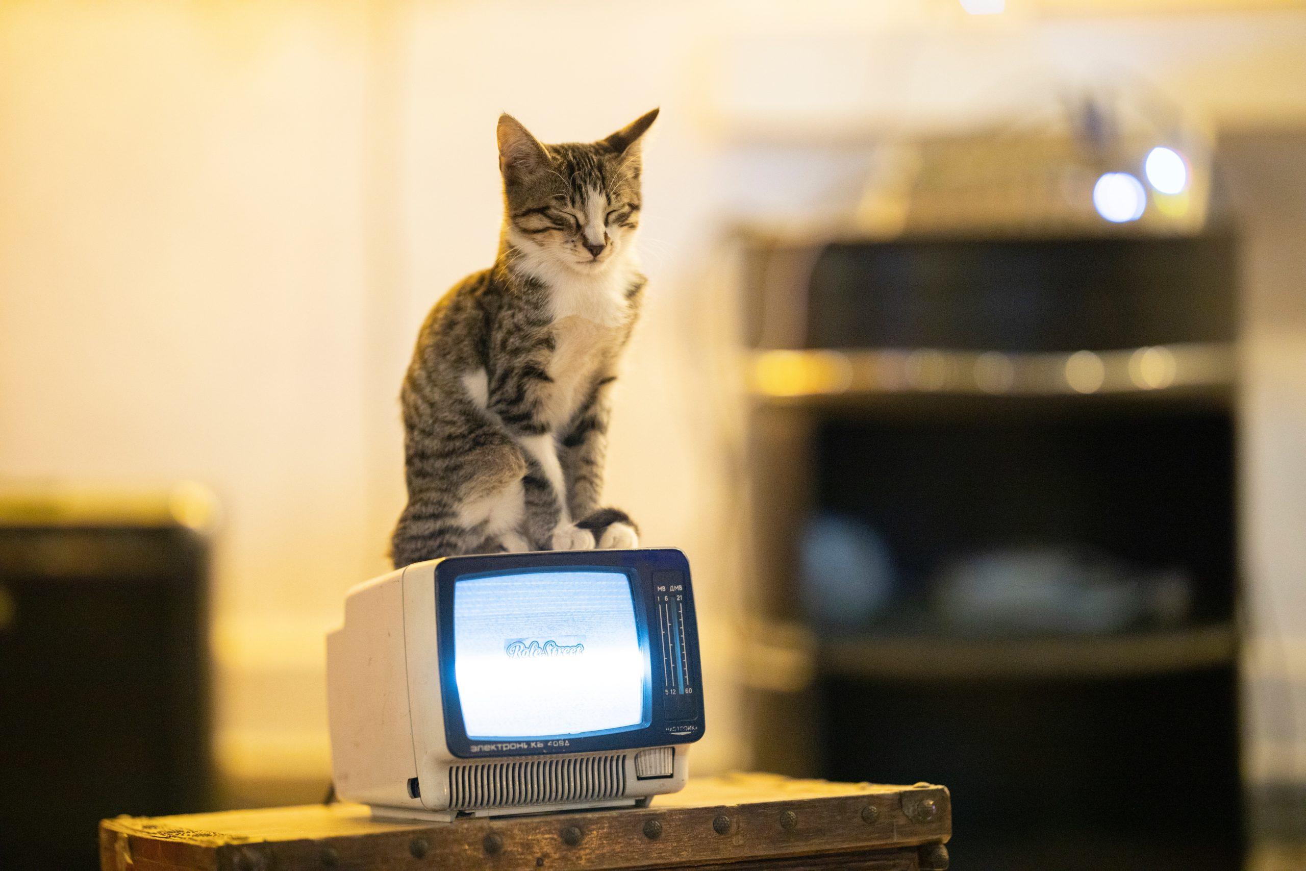chat sur un minitel