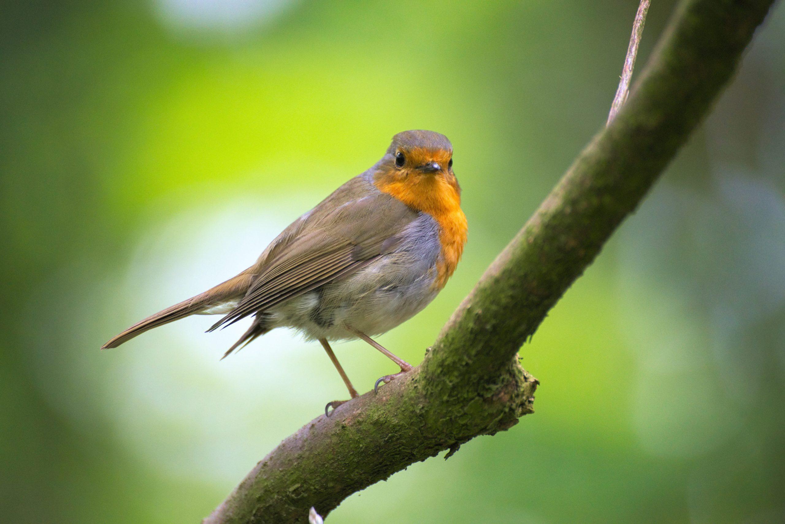 oiseau-sauvage-nature