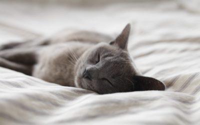 Aménager son appartement pour rendre son chat heureux