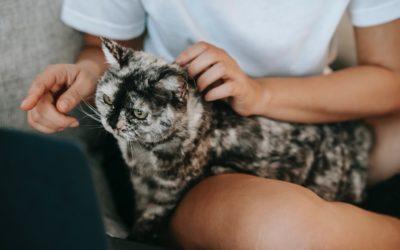 5 bonnes raisons de vivre en colocation avec un chat