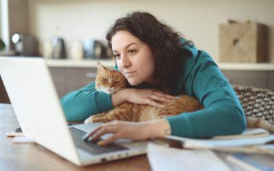 JOPY est solidaire avec les chats des étudiants