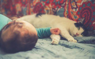 Accueillir un bébé quand on a un chat