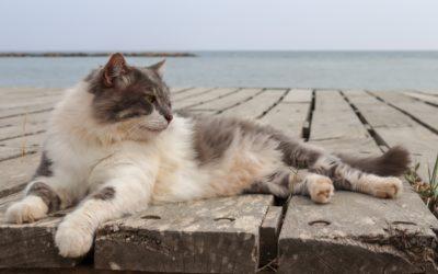 Des vacances de chat, au poil