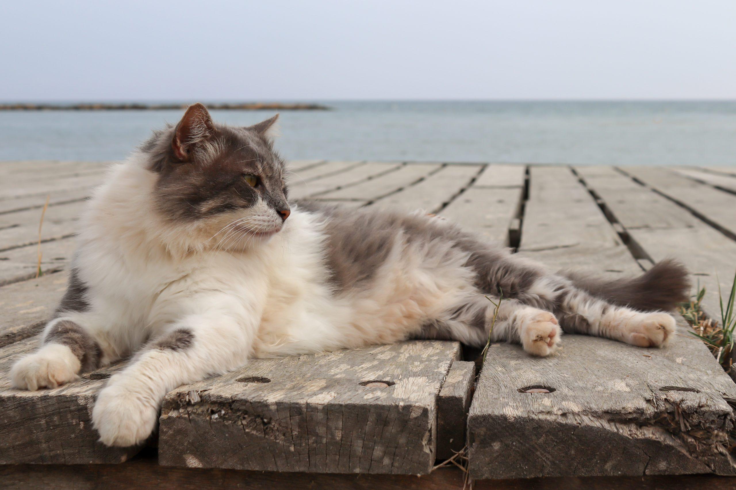 chat-en-vacances-a-la-mer
