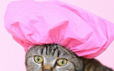 Et si votre chat était un grand fan de baignade ?