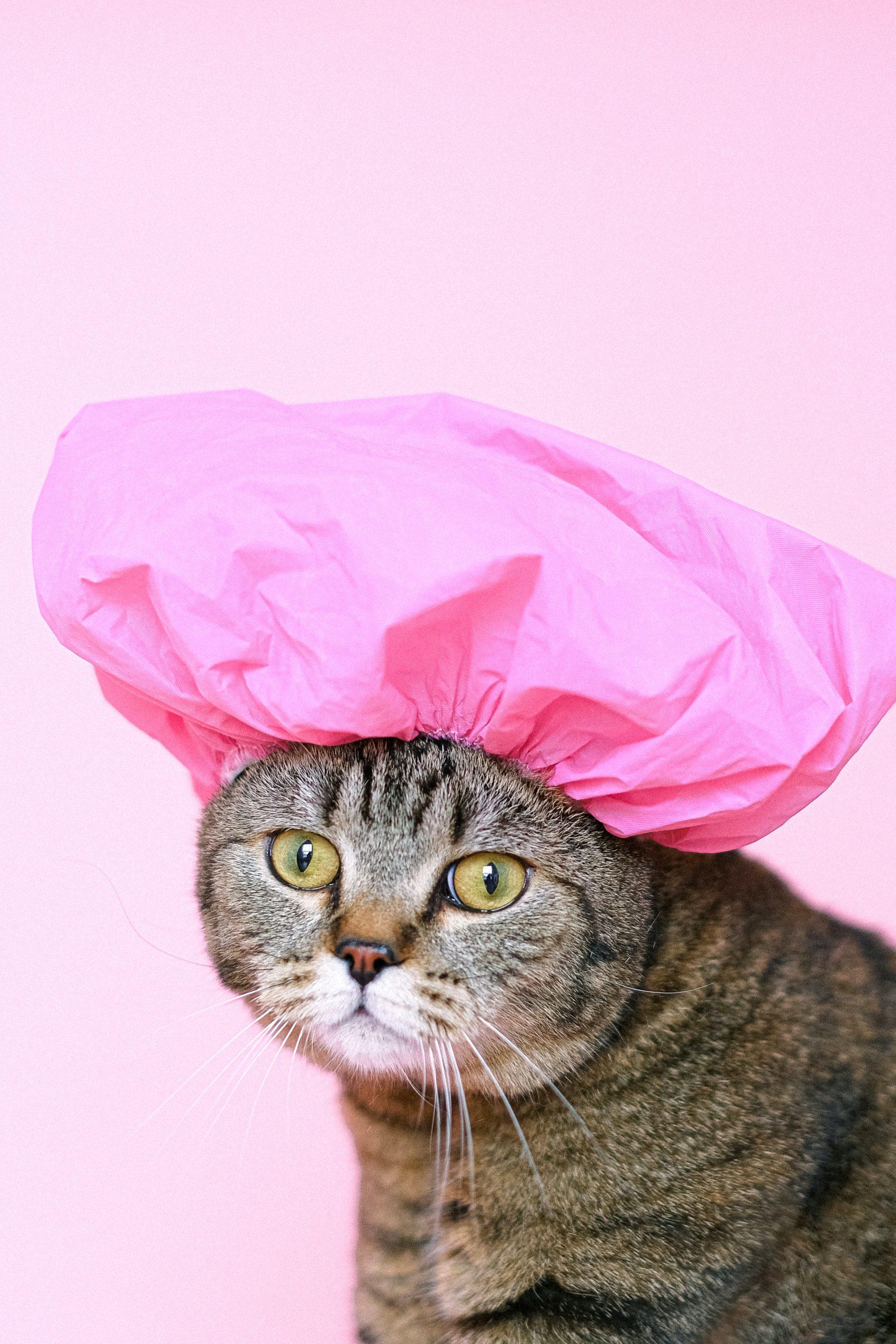 chat en bonne de bain rose