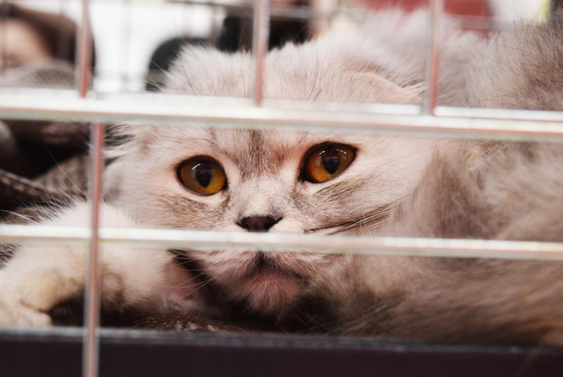 chat gris triste derrière des barreaux